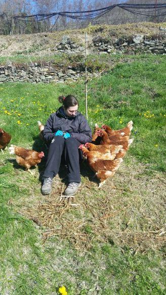 galline le comari